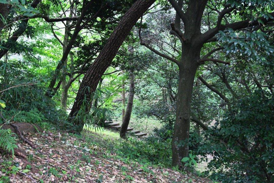 Park Nishi